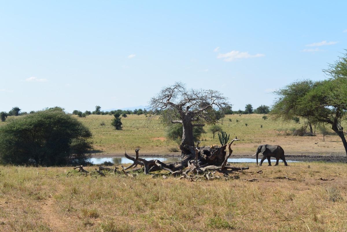 SAFARI IN TANZANIA –TARANGIERE