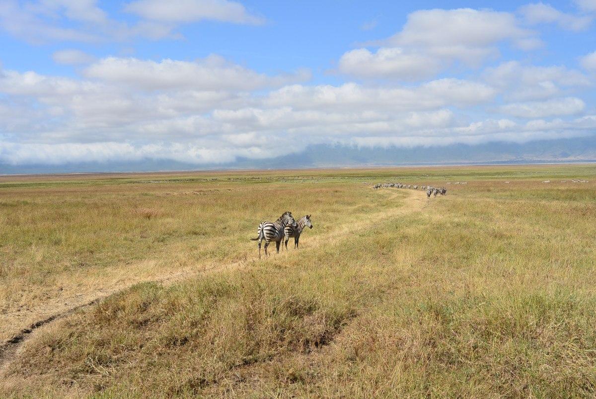 SAFARI IN TANZANIA – NGORONGOROKRATER